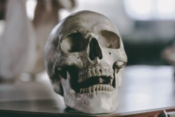 nauka, kostur